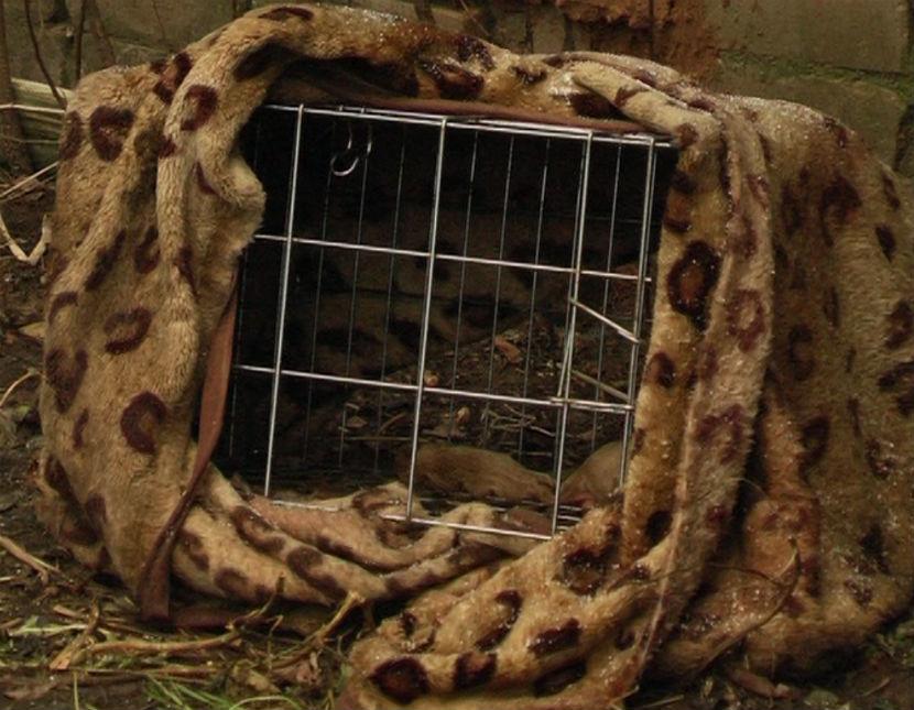 Чтобы животные не разбежались, их держали в клетках
