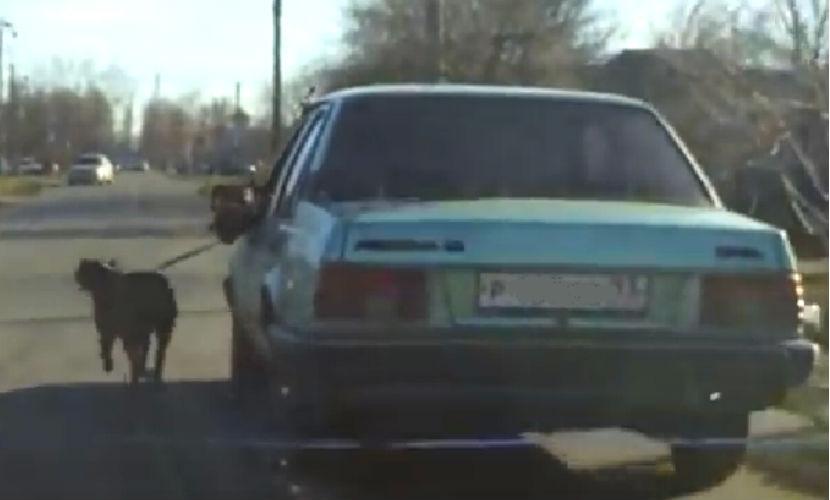 Живодер на Кубани заставил своего пса на поводке бежать за автомобилем