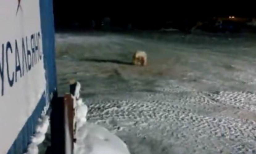 Повара, накормившего медведицу взрывчаткой, оштрафовали на 3 тысячи рублей