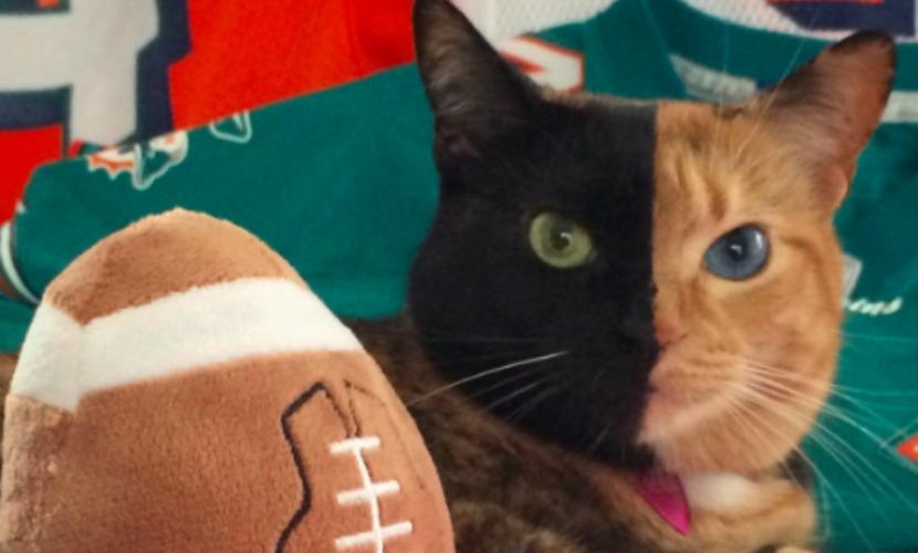 Кошка с черно-желтой мордочкой и голубым и зеленым глазами стала звездой Интернета