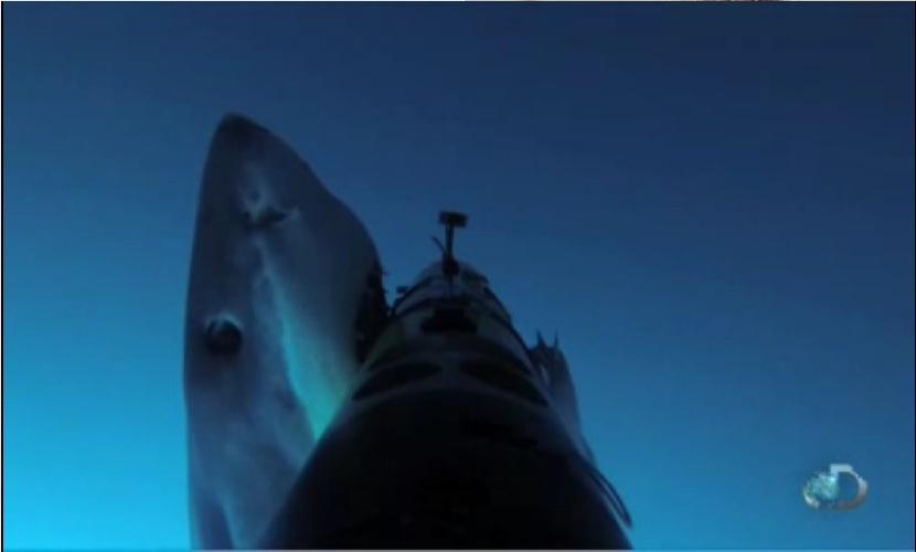 Акулы-людоеды во время научного исследования напали на американский беспилотник