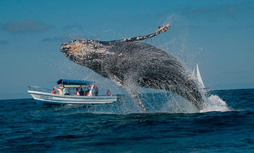 При столкновении корабля с китом пострадали несколько пассажиров