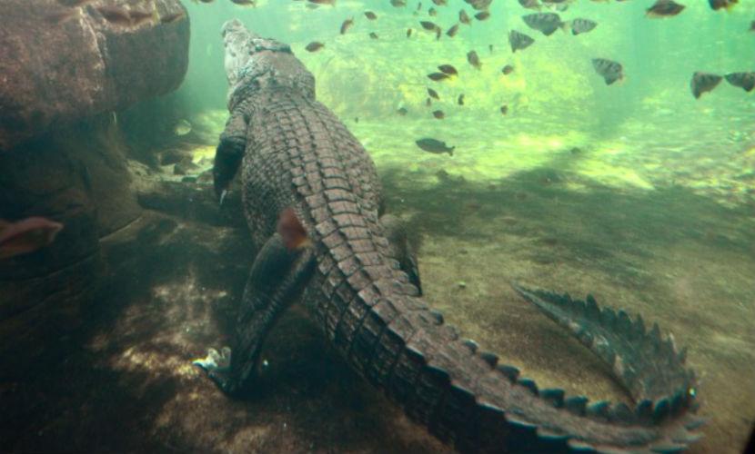 Ученые нашли череп исполинского крокодила весом в три тонны