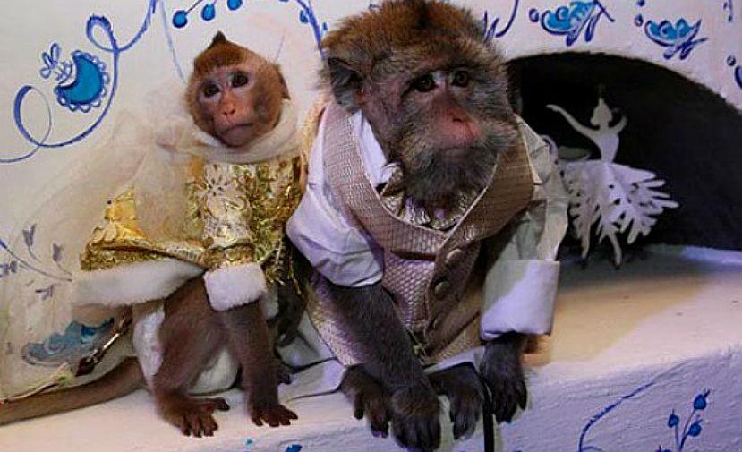 Свадьба обезьян состоялась в зоопарке Барнаула