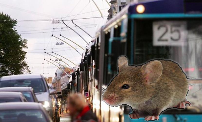 Чиновники обвинили мышей в ужасных пробках на дорогах Брюсселя