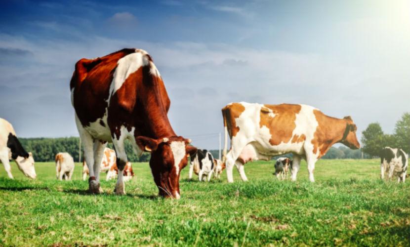 Отказ от говядины, молока и сыра поможет сохранить климат, - ученые