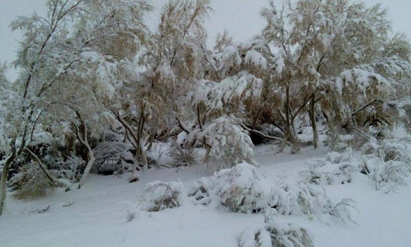 В Узбекистане случилась сенсация - снег полностью укрыл одно из самых жарких мест страны