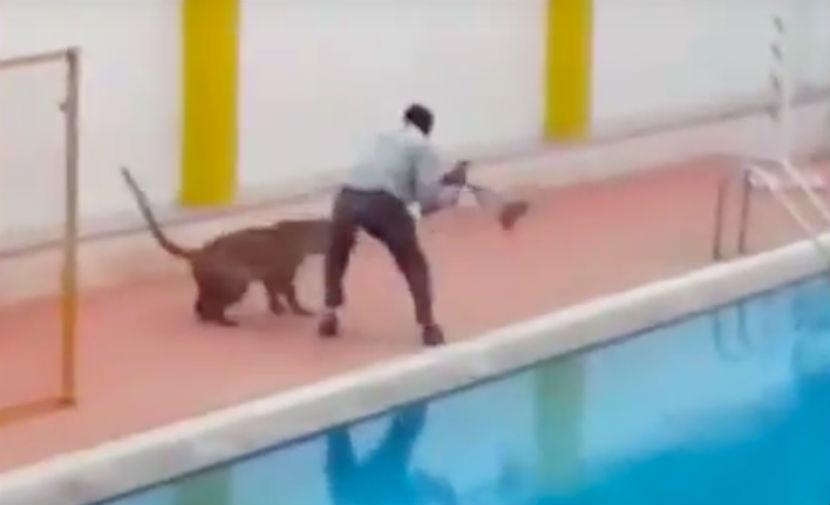 Ранивший четырех человек в индийской школе леопард попал на видео