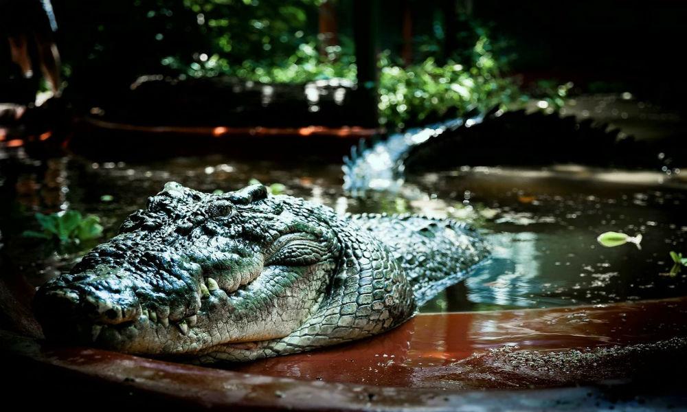 Индонезийский крокодил откусил руку и растерзал 26-летнего российского туриста