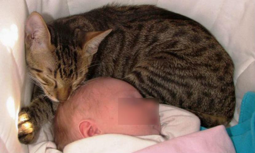 Домашняя кошка задушила 2-месячную девочку под Нижним Новгородом