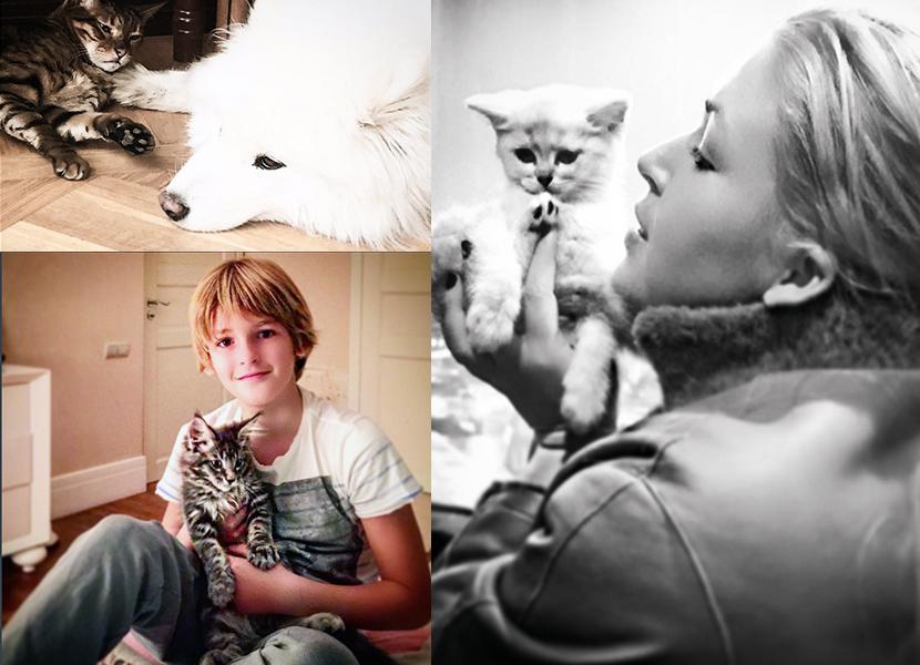 Дубцова кот Сойер