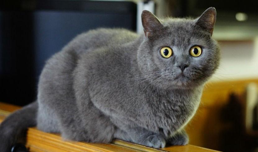Собака спасла жизнь кошке, пострадавшей от живодеров