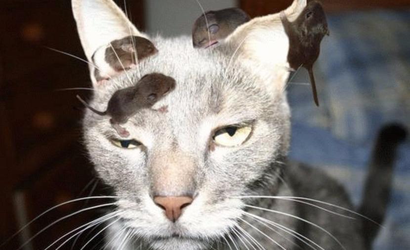 16 миллионов американцев страдают приступами ярости из-за кошек, - ученые