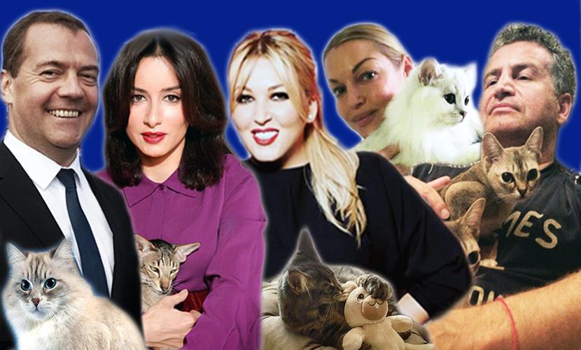 Топ-5 домашних питомцев, с которыми отпраздновали День кошек российские звезды