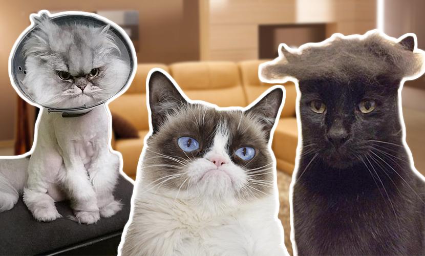 Коты захватили мир, открыли аккаунты в соцсетях и стали похожими на Трампа