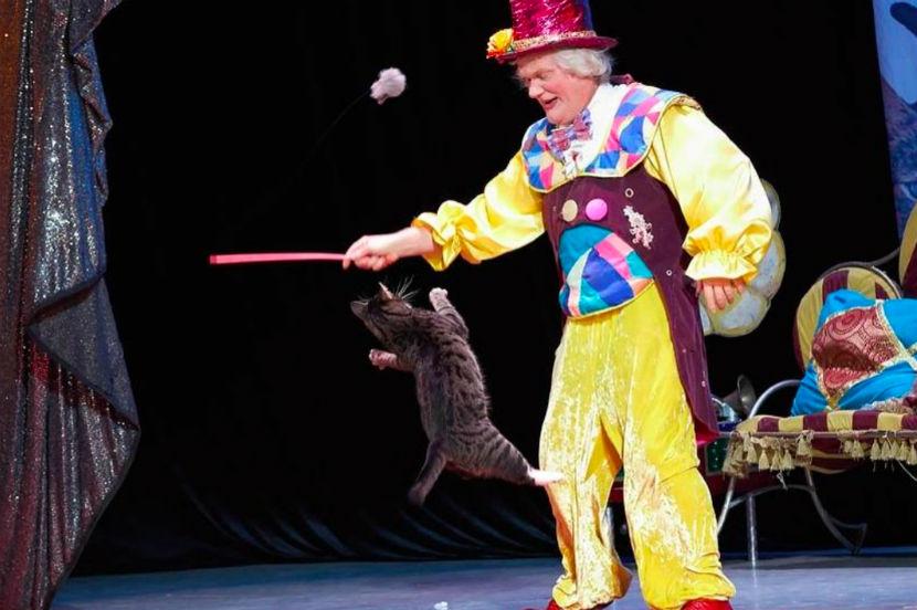 В Театре кошек Куклачева обитает 200 животных разных пород.
