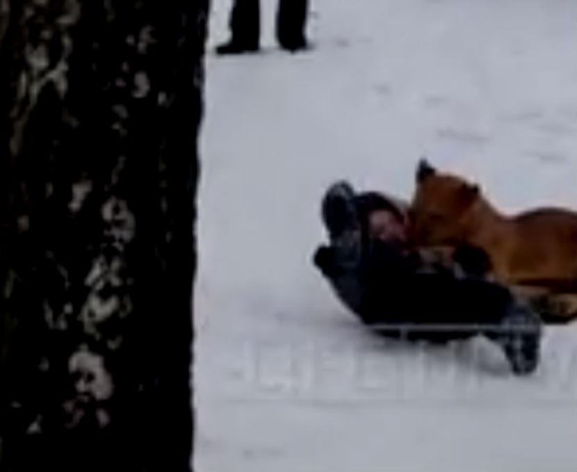 За нападение львенка на мальчика накажут руководителей зверинца
