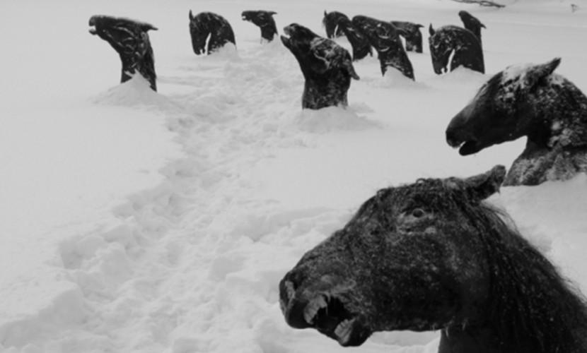 42 лошади замерзли насмерть во льду рядом с поселком в Казахстане