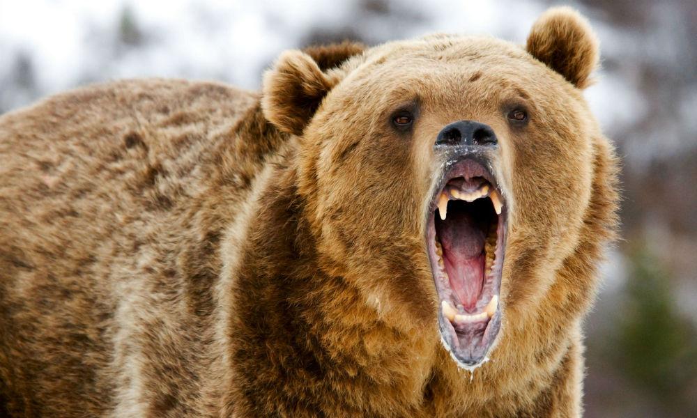 Женщина подверглась нападению собственного медведя в Хабаровске