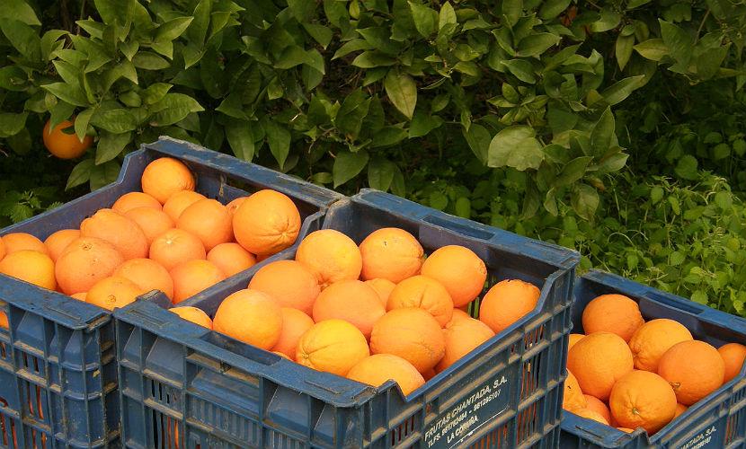 Россия заменила фрукты и овощи из Турции на сирийские