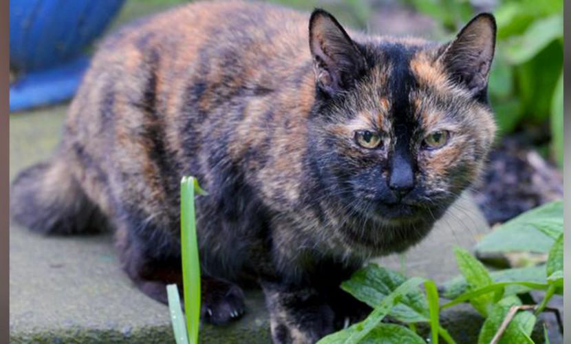 Самую старую кошку британских приютов бросали 30 тысяч раз