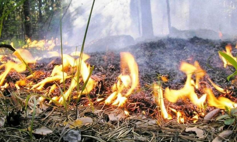 Родители случайно сожгли 9-летнюю дочь во время пикника на Алтае