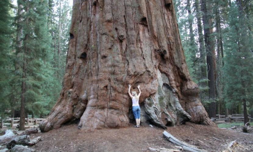 Австрийские ученые обнаружили сходство деревьев с людьми