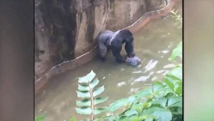 Мать упавшего в вольер с гориллой ребенка объяснила инцидент словами всякое случается
