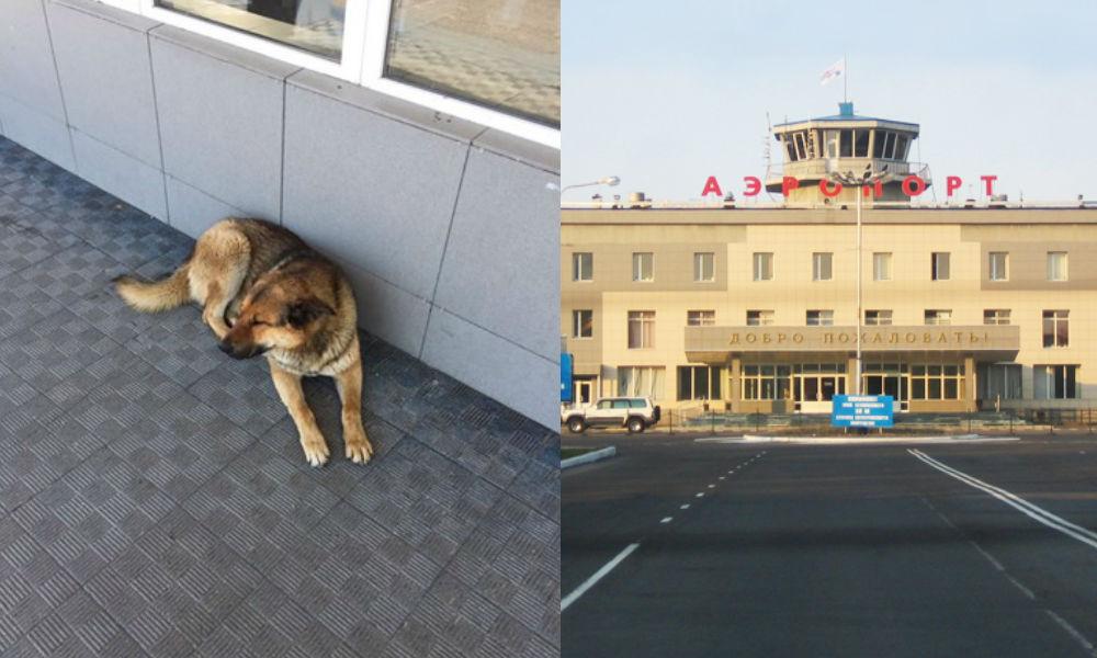 На Камчатке пса прозвали Хатико после недели ожиданий улетевшего хозяина
