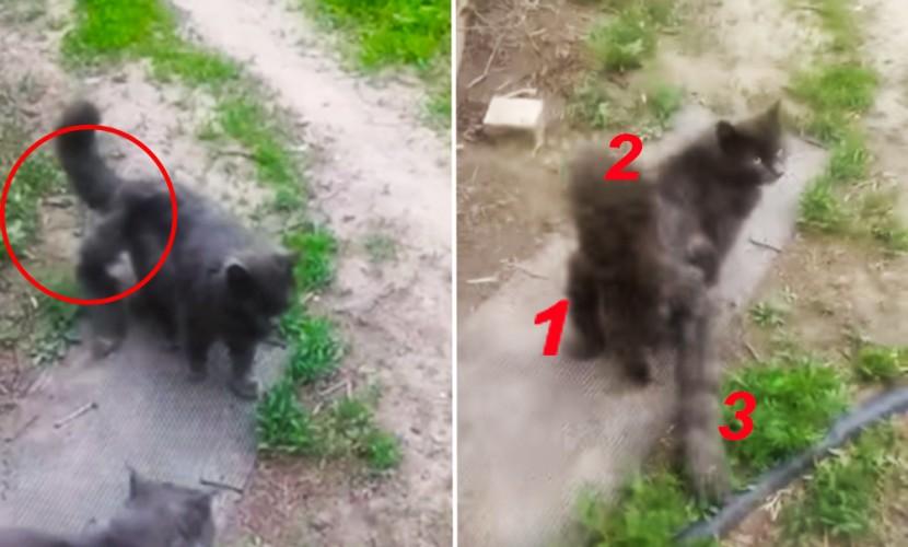 Кота-мутанта с тремя хвостами сняли на видео жители Астраханской области