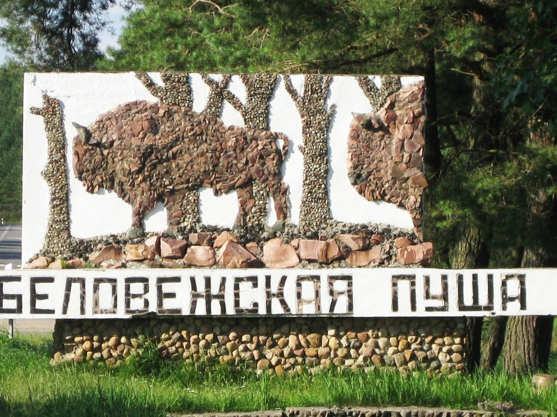 Власти Польши решили уничтожить Беловежскую пущу из-за жука-короеда