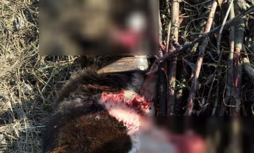 Хозяйка решила избавиться от собаки, отдав на пристрелку охотникам в Кирове