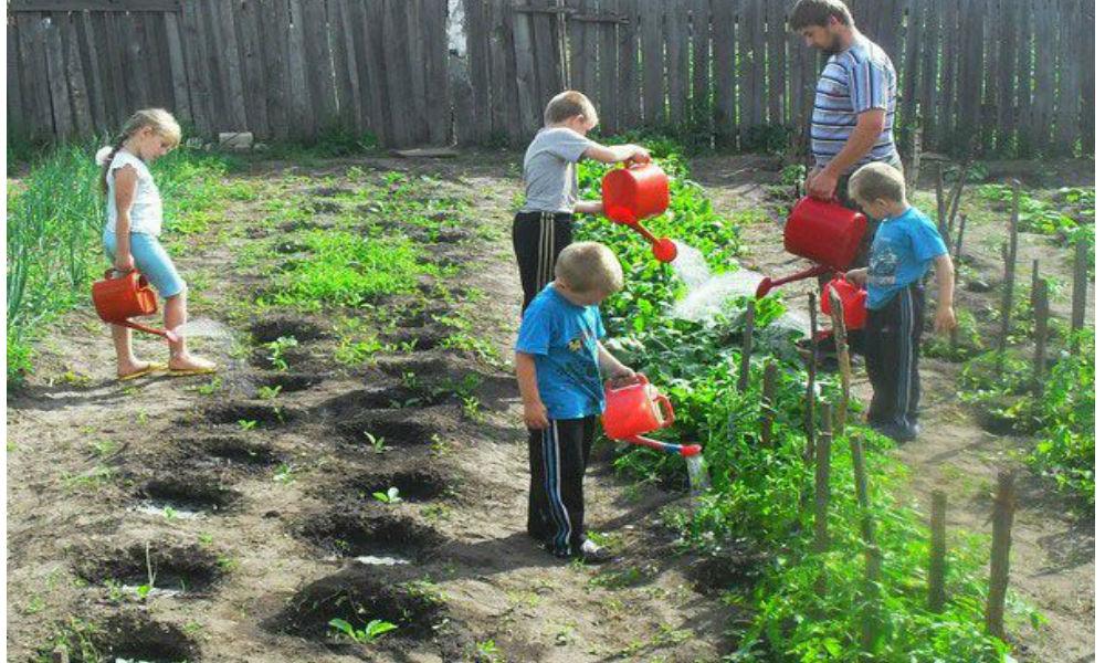 Дачников обязали платить членские взносы за сады и огороды по новому закону