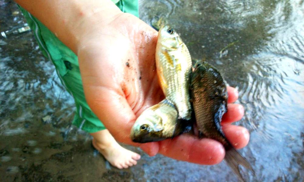 Опасные рыбные гибриды хлынули на улицы Таганрога