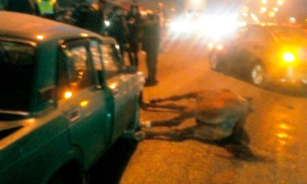 Трое молодых мужчин погибли в ДТП с лошадью под Нижним Новгородом