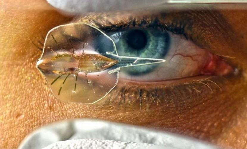Миниатюрного робота-ската из золота и кардиомиоцитов крыс создали ученые