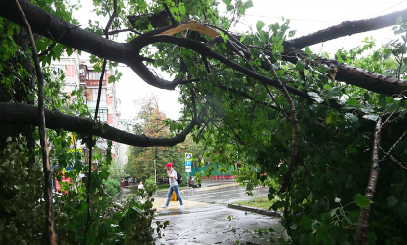 На Москву обрушился ливневый дождь: мощный ветер валит деревья на многоэтажки