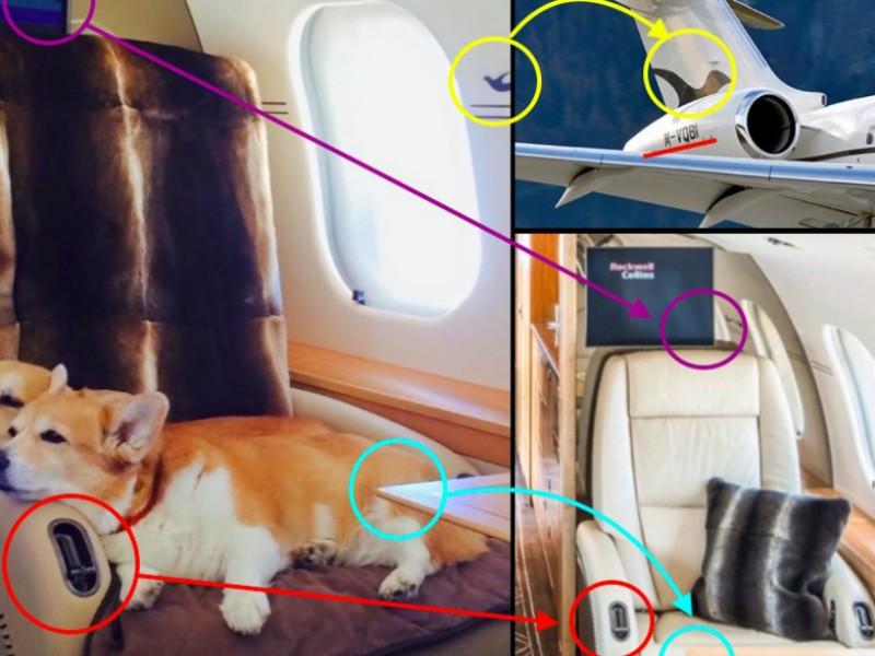 Навальный обвинил Шувалова в трате 40 миллионов на перевозку собак частным самолетом