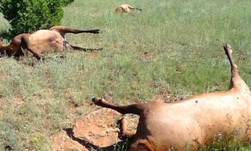 Больше тысячи оленей убила первая за 75 лет опасная сибирская язва на Ямале