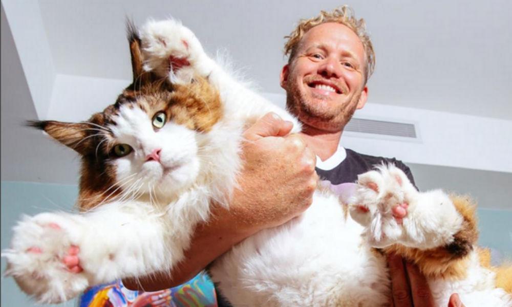 Самым большим котом в мире оказался 1,2-метровый мейн-кун Самсон из Нью-Йорка