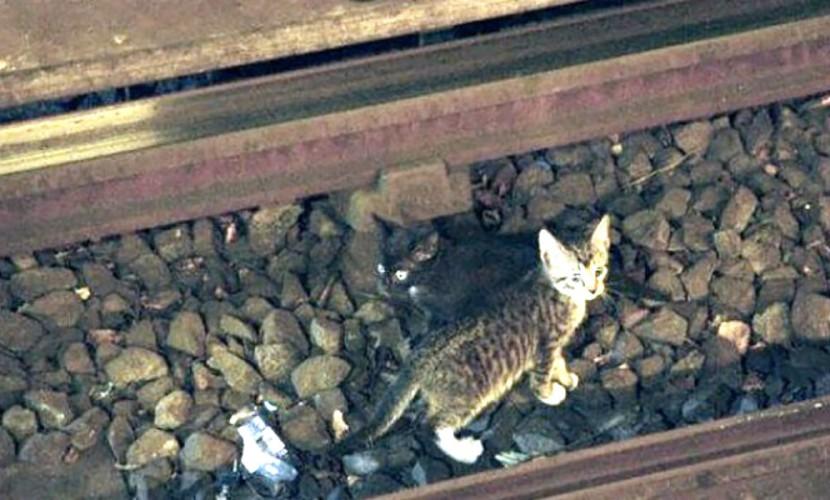 Добрый машинист приостановил поезд московского метро из-за котенка напутях