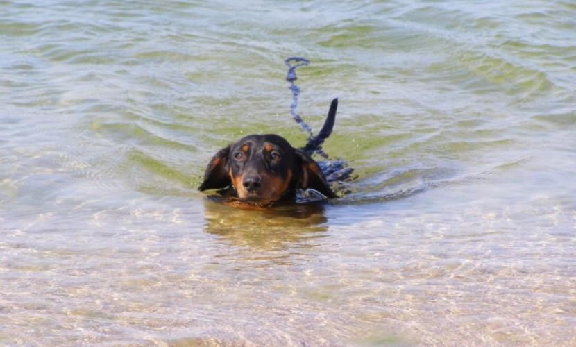 ВРоссии туристы потеряли собаку сдрагоценностями намиллион рублей