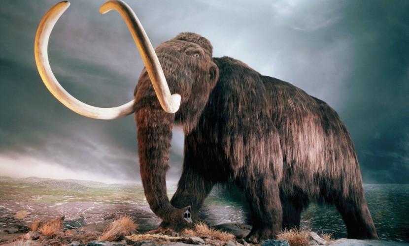 Ученые дали новое объяснение вымиранию мамонтов на Земле