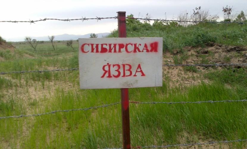 Сибирскую язву выявили у пятерых взрослых кочевников и трех детей в Ямало-Ненецком округе