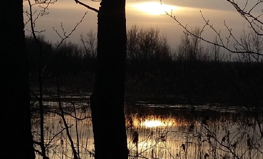 Отдых трех братьев закончился гибелью 10-летнего мальчика в воронежской реке