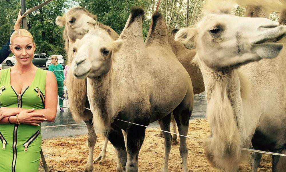 Королеву эпатажа Анастасию Волочкову попросили научить верблюда шпагату