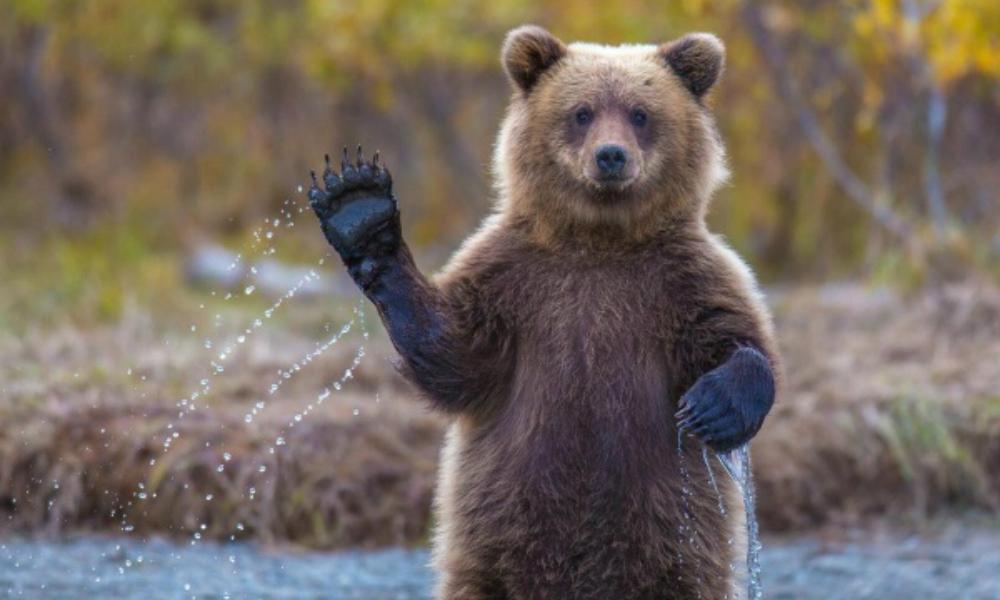 Полицейский убил медведя в сельской школе в Приамурье