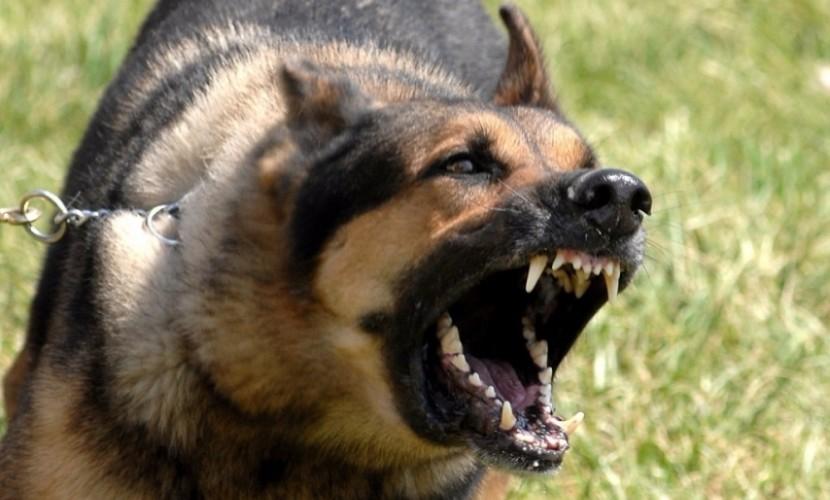 3-х летнего ребенка загрызла собачка вБурятии