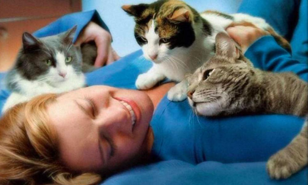 Домашние и бродячие кошки могут вызвать у человека смертельное заболевание, - ученые
