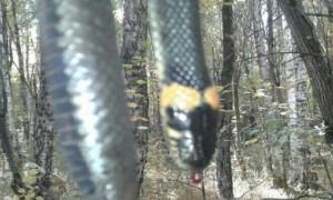 Загадочная змея-«мутант» попала на фото и взбудоражила жителей Пензенской области